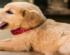 ZOO CITY savjetuje: zašto psi zijevaju?