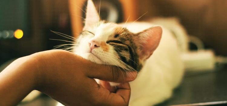 Mica – maca liječi predenjem